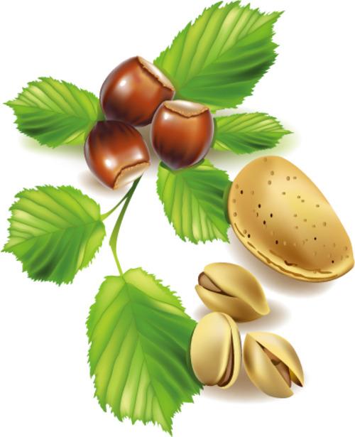 Product picture vector fruits berries.zip